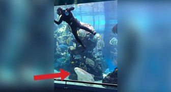 A sub is cleaning the tank: look what happens when the Shark arrives... Wow!
