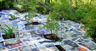 Kranten verspreiden in de tuin: dit is een tijd- en geldbesparende  truc!