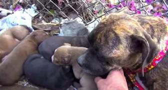 En återträff mellan en kull räddade valpar och deras mor - ett fantastiskt initiativ av Hope for Paws