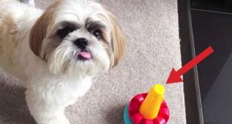 Il met un jouet devant le chien. Que va-t-il faire? Vous allez être scotchés!