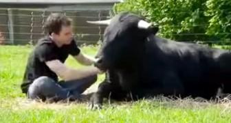 Jahre zuvor hat er diesen Stier vor der Arena gerettet: Ihre Freundschaft macht euch sprachlos