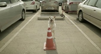 A dog waits for his friend in a parking lot: the reason why is very emotional !