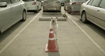 Un perro espera su amigo en un estacionamiento: el motivo les regalara una emocion