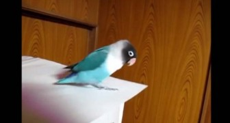 He puts his favorite song and starts filming: what this parrot does is hilarious!