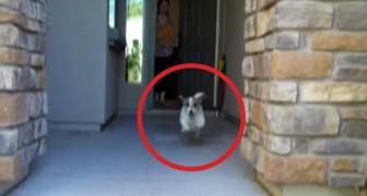 Ella abre la puerta de casa: lo que esta por hacer este perrito les sacara una sonrisa