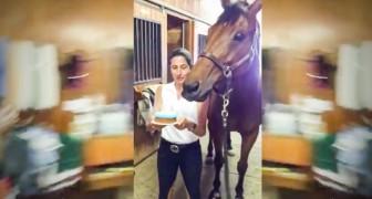 Dit paard viert zijn verjaardag. En zijn reactie hierop? Je zult je ogen niet geloven!