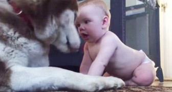 The baby comes up to him and teases him: the reaction of the dog will change your day !