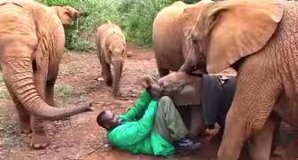 A terrified baby elephant was abandoned by his mother: here's his new FAMILY!