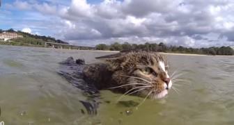 Den här katten slår att alla hundar med hästlängder... Vilket geni!