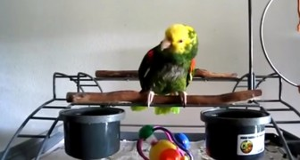 A new baby arrives in the family, what this parrot does is beyond belief !!