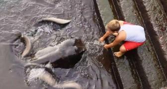 Un bambino si avvicina alla banchina, non immaginate chi stia venendo a salutarlo