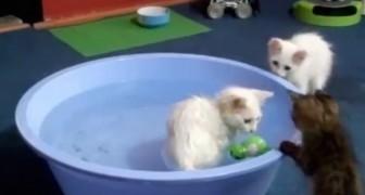 Estos gatos tienen una PASION insospechable...Sabian que pueden llegar a tanto?