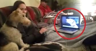 Twee honden zijn met elkaar in gesprek via Skype: je gelooft je ogen niet!