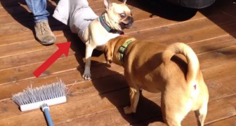 Seeing these dogs getting into trouble you will change your day !