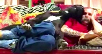 Er will sich auf der Couch entspannen, aber schaut mal, was die Dogge macht... WITZIG!