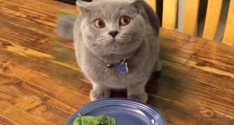 In slechts 4 seconden, weet deze SCHULDIGE kat je aan het lachen te maken!