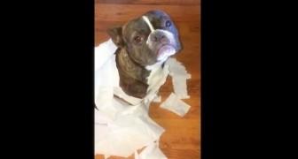 Pergunta aos seus dois cães quem fez a bagunça e um deles dedura...