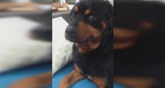 Dice al cane di fare un'espressione feroce: la sua risposta è adorabile!