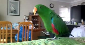 Voilà ce qui se produit quand ce perroquet écoute sa musique préférée