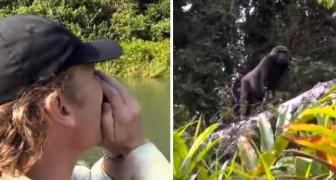Salvou um gorila e o libertou na selva há 5 anos: será que o gorila vai lembrar dele?