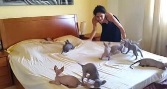Ici ça se passe comme ça TOUS les jours quand on refait le lit. Trop drôle!