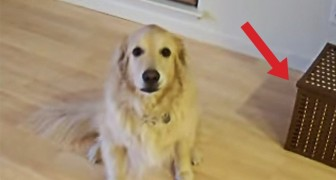 He tells his dog to CLEAN the house : what he does in a few seconds is priceless!