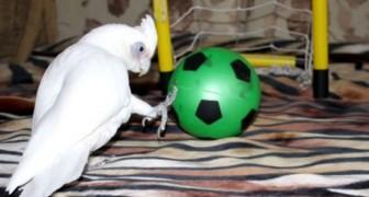 Ein Papagei mit der Leidenschaft für Fußball. Diese Kombi ist superwitzig