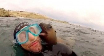These divers receive a surprise visit from some baby seals: the video is ADORABLE