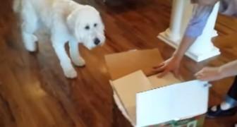 Han ger sin hund en överraskning som födelsedagspresent. Vad finns i lådan?