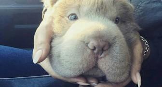 Il mio cane assomiglia ad un orso... e ha molti più amici di me.