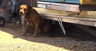 He saw this dog chained up for three years... look how they managed to take it away!