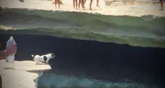 Questo cane minuscolo si mette sul bordo dello scoglio. Un secondo dopo? Che coraggio!