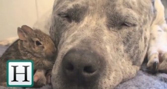 Lovely friendship between animals!