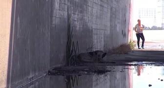 Deze hond ligt moederziel alleen in een kanaal. De redding is nabij!