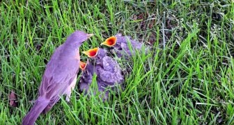 Kleine Vögel sind aus dem Baum geflogen. Schaut mal, was die Mutter macht