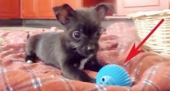 Regalano al cucciolo una nuova palla, ma ha una caratteristica che non si aspettava!