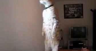 Il gatto su due zampe