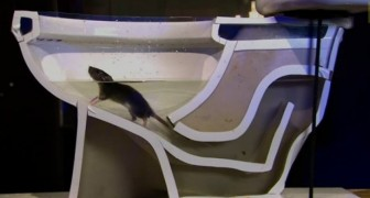 Voici comment un RAT peut remonter les tuyaux des WC en toute simplicité