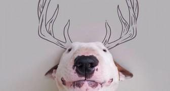 Een hond en een marker vormen een perfecte match: hier zie je hoe dit kunstproject tot stand is gekomen