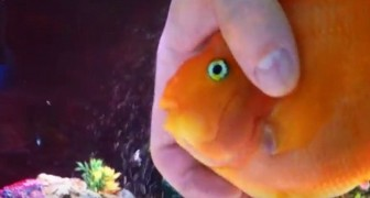 I didn't think that fish had feelings .... until I saw what he does !