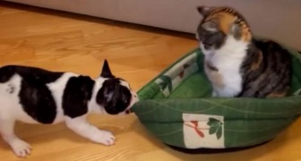 This is what happens when a cat decides to steal a dog's bed !