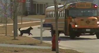 Die Türen des Busses gehen auf. Das Verhalten des Hundes wird euch zum Lachen bringen :)
