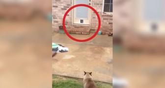 Deze man installeert een kattenluikje...de kat denkt hier anders over!