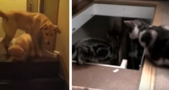 La differenza tra cane e gatto è riassunta in questo video... Da piegarsi dalle risate!