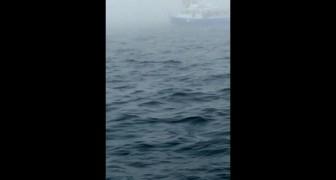 Stanno filmando l'oceano, ma a 0:08 vivono un momento che non dimenticheranno MAI!