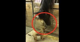 De vriendschap tussen dit paard en deze hond tovert een glimlach op je gezicht... Wow!