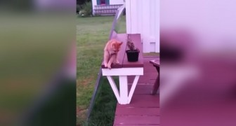 She starts filming her cat in the garden: what he does after 10 seconds it is beyond belief !