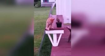 Sie filmt ihre Katze im Garten. Was sie 10 Sekunden später macht, ist unglaublich