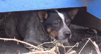 He lived in a dumpster for 11 months ... What happens here, will change his life