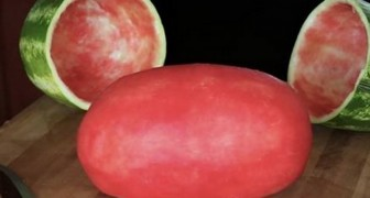 He brings this watermelon to the party and all are amazed. Here's how he did it...